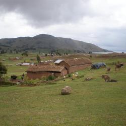 Ferme dans la région de Capachica
