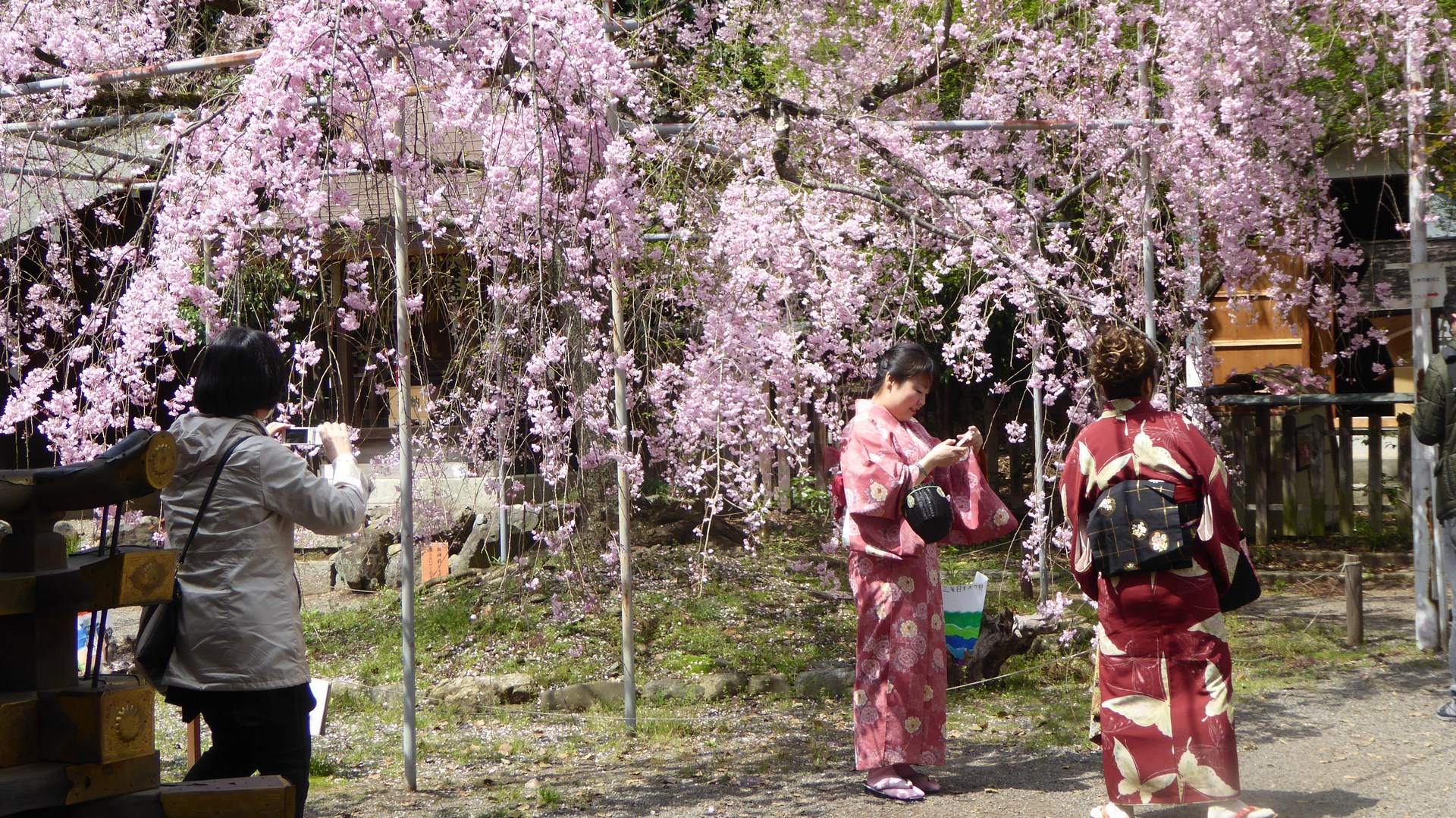 Geishas au sanctuaire Kitano Tenmangu