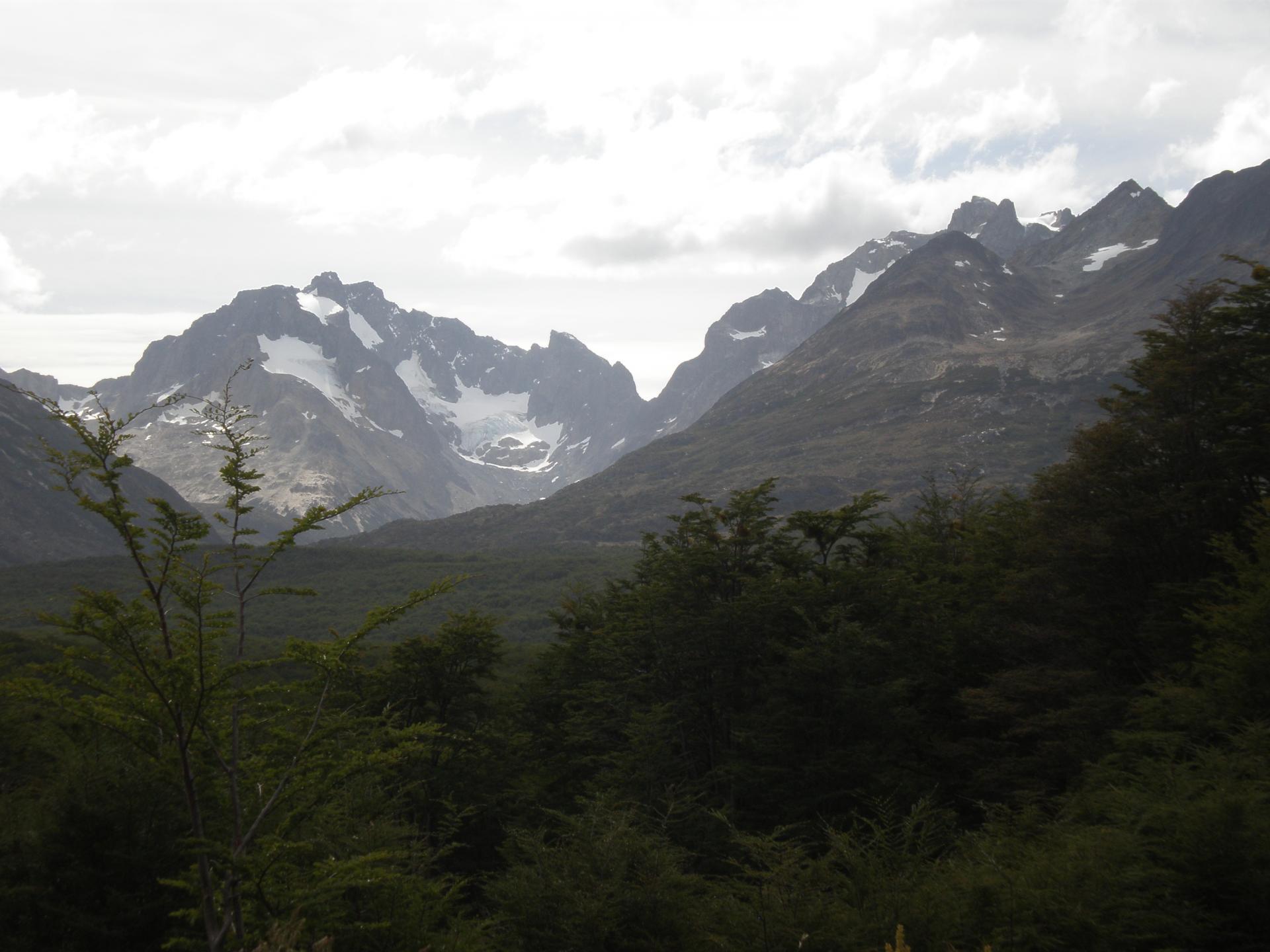 Forêt et montagnes