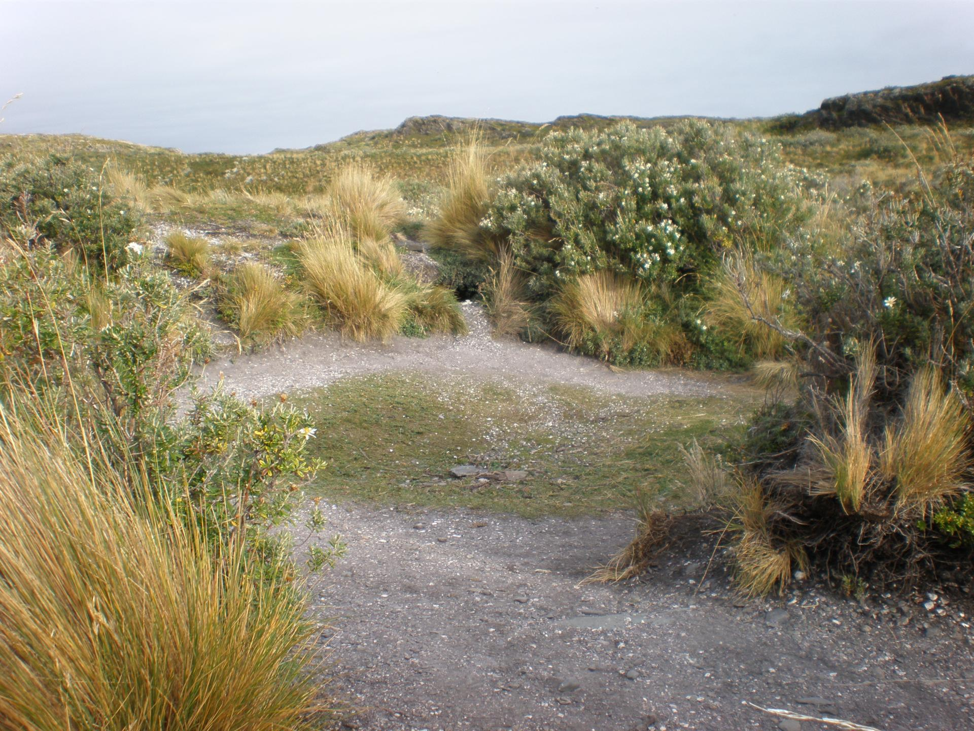 Traces d'habitat Yamana